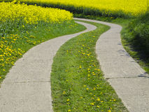 Agrarian street in canola field Royalty Free Stock Image