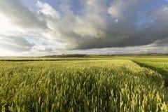 Agrarisch gebied Royalty-vrije Stock Afbeeldingen