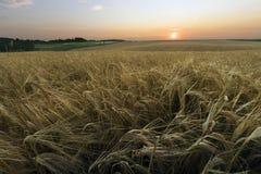 Agrarisch gebied Royalty-vrije Stock Fotografie
