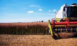 Agrariskt industriellt landskap med aggregat av en sammanslutningnärbild, som samlar en skörd på ett fält i en solig dag royaltyfri fotografi