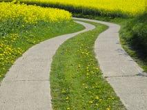Agrarna ulica w canola polu Obraz Royalty Free