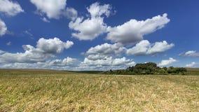 Agrarny pole Zdjęcie Stock