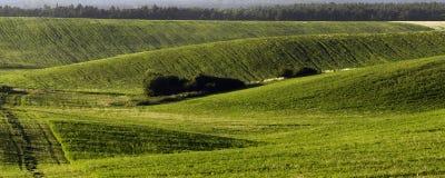 Agrarny pole Zdjęcia Royalty Free
