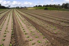 Agrculture e explorações agrícolas - Seedlings Imagem de Stock Royalty Free