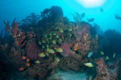 agregaci korala ryba wypust blisko Zdjęcie Royalty Free