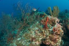 agregaci składu korala ryba rafa Obrazy Royalty Free