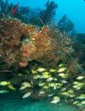 agregaci składu korala ryba wypust Obraz Royalty Free