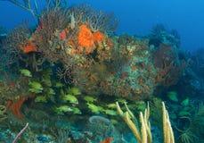 agregaci składu ryba rafa Zdjęcie Royalty Free