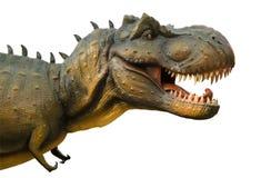 Agressief T Rex op witte achtergrond Stock Afbeelding
