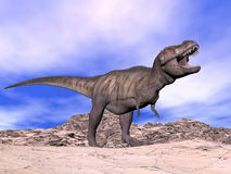 Tyrannosaurus shouting - 3D render Stock Images