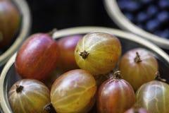 Agrest świeże jagody Obrazy Stock