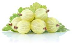 Agrest jagod świeżych owoc agrestowa owoc odizolowywająca na w Zdjęcia Stock