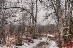 Agrest Spada stanu park na Minnestoa ` s Północnym brzeg Jeziorny przełożony w lecie Fotografia Stock