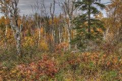 Agrest Spada stanu park w Minnestoa podczas jesieni na Północnym brzeg Jeziorny przełożony Obrazy Royalty Free