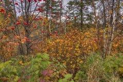 Agrest Spada stanu park w Minnestoa podczas jesieni na Północnym brzeg Jeziorny przełożony Obrazy Stock