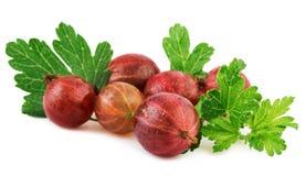 Agrestowa czerwona dojrzała jagoda z liściem na bielu Obrazy Stock