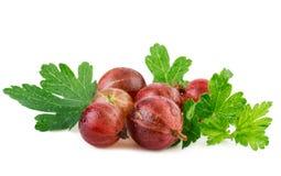 Agrestowa czerwona dojrzała jagoda z liściem odizolowywającym na bielu Zdjęcie Stock