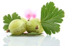 Agrestowa owoc Zdjęcia Royalty Free
