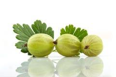 Agrestowa owoc Fotografia Stock
