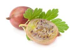 Agrestowa owoc na bielu Obraz Stock