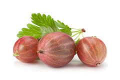 Agrestowa owoc na bielu Fotografia Stock