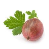 Agrestowa owoc na bielu Zdjęcie Stock