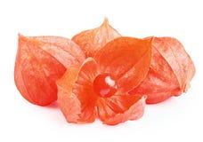 Agrestowa pęcherzycy owoc Obrazy Royalty Free