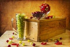Agrestowy czerwonego rodzynku owoc rocznik Obrazy Royalty Free
