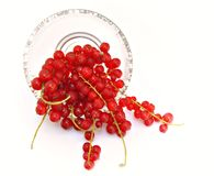 agresty czerwoni Fotografia Stock