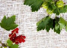 Agresty i czerwoni rodzynki na białej pielusze Zdjęcie Royalty Free