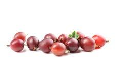 Agresty owocowi Zdjęcia Stock