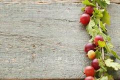 Agresty owocowi Zdjęcie Stock