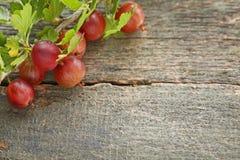Agresty owocowi z liśćmi Obraz Stock
