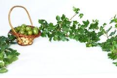 Agresty w łozinowym koszu w gałązki ramie z zielonymi liśćmi Fotografia Stock