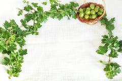 Agresty w łozinowym koszu w gałązki ramie z zielonymi liśćmi Zdjęcia Royalty Free