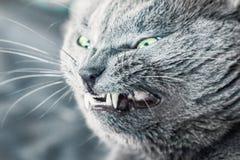 Agresyjny kota uśmiech Zdjęcia Royalty Free