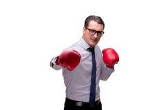 Agresywny biznesmen z bokserskimi rękawiczkami odizolowywać na bielu Obraz Royalty Free