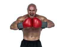 Agresywny bokser napina mięśnie Zdjęcie Royalty Free