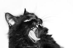 agresywny czarny kot Fotografia Royalty Free
