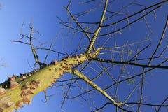 Agresywny drzewo Obraz Royalty Free