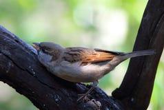 Agresywny ptak Zdjęcia Stock