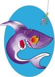 agresywny rekin Fotografia Stock