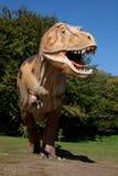 agresywny rex t Zdjęcie Royalty Free