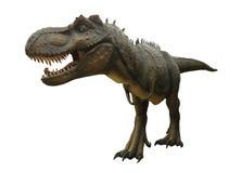 Agresywny T Rex na białym tle Fotografia Royalty Free