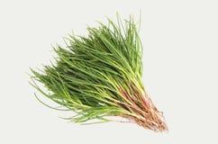 Agretti Gemüse Stockfoto
