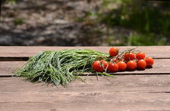 Agretti and tomatoes Stock Photography