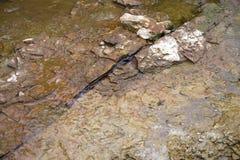 Agriétese en la parte inferior de piedra del río Fotografía de archivo libre de regalías