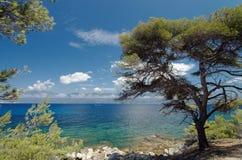 Agriate wybrzeże w Corsica Obraz Royalty Free