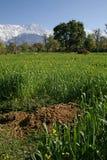 agric wiejskiego ekologicznej hodowli Zdjęcie Stock