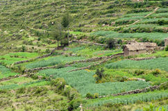 Agricol land in Bolivia Royalty Free Stock Photography